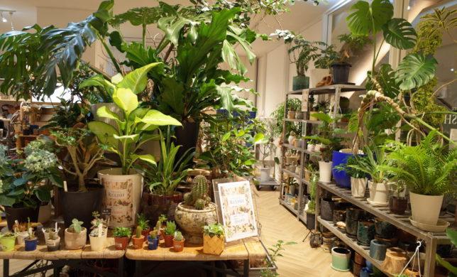 植物20%OFFセール中です!