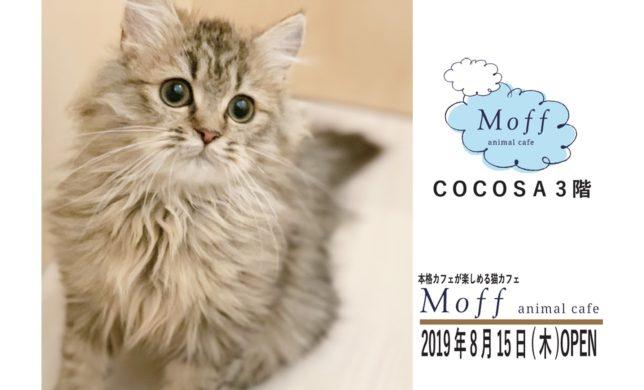 3Fに猫カフェ「Moff animal cafe」がNEW OPEN!