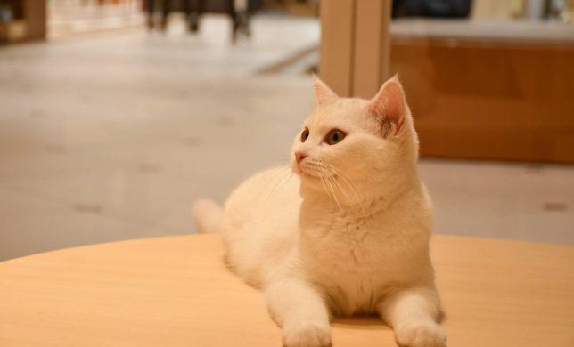 Moff animal cafe の 新しい猫ちゃん紹介♪