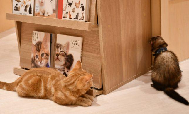 可愛い猫とフェレットに癒されませんか⛄