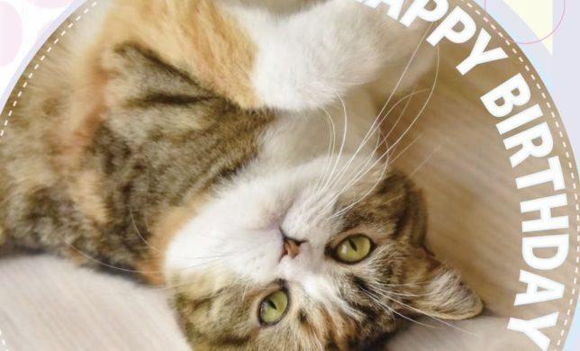猫ちゃんの🎉誕生日イベントのお知らせ🎉