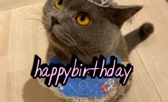 今月お誕生日の猫ちゃん😸✨