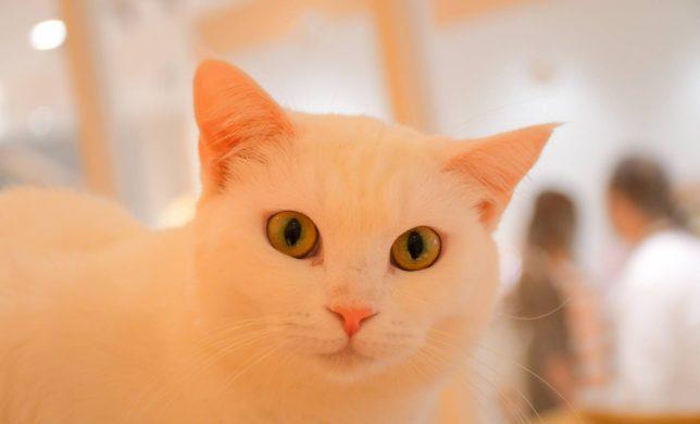白い猫ちゃん達をご紹介します♪