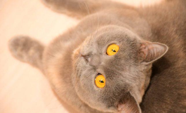 店内も猫ちゃんもXmas🎄仕様✨